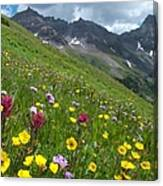 Colorado Wildflowers And Mountains Canvas Print