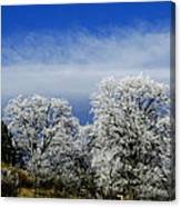 Colorado's First Day Of Winter Canvas Print