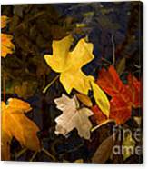 Colored Floaters Canvas Print