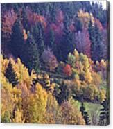 Colored Landscape Canvas Print
