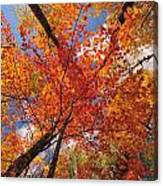 Colored Leaves Ground To Sky Canvas Print
