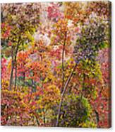 Colored Pallet Smoke Trees Canvas Print
