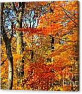 Colorfall Trees Canvas Print