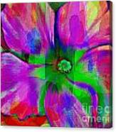 Colorful African Violet Canvas Print