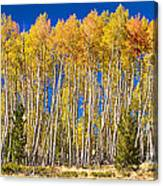 Colorful Aspen Panorama Canvas Print