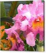 Colorful Assorted Cattleya Orchids Canvas Print