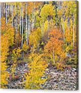 Colorful Autumn Forest In The Canyon Of Cottonwood Pass Canvas Print