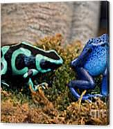 Colorful But Deadly Poison Dart Frogs Canvas Print