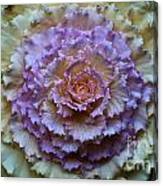 Colorful Cabbage Canvas Print