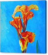 Colorful Canna Canvas Print