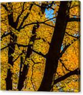 Colorful Canopy Canvas Print