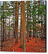 Colorful Carolina Forest Canvas Print