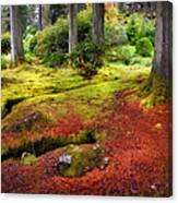 Colorful Carpet Of Moss In Benmore Botanical Garden. Scotland Canvas Print