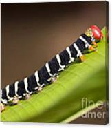 Colorful Caterpillar Canvas Print