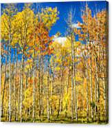 Colorful Colorado Autumn Aspen Trees Canvas Print