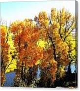 Colorful Cottonwoods Canvas Print