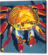 Colorful Crab Canvas Print