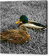 Colorful Ducks Canvas Print