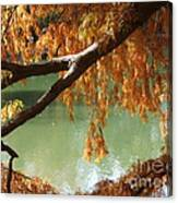 Colorful Fall Bald Cypress Canvas Print