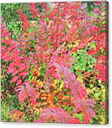 Colorful Fall Leaves Autumn Crepe Myrtle Canvas Print