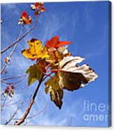 Colorful Fall Leave's With Blue Sky Canvas Print