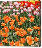 Colorful Flower Bed Canvas Print