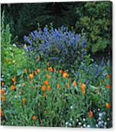 Colorful Flowers Along The Trail Canvas Print