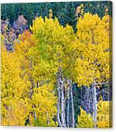 Colorful Forest Canvas Print
