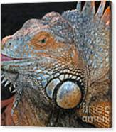 colorful Iguana Canvas Print