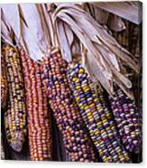 Colorful Indian Corn Canvas Print