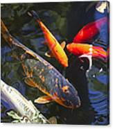 Colorful Koi Canvas Print