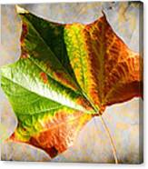 Colorful Leaf On The Ground Canvas Print