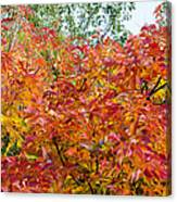 Colorful Leaves In Autumn Canvas Print