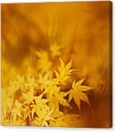 Colorful Maple Canvas Print
