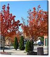 Colorful Ohio Trees Canvas Print