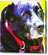 Colorful Old Dog Canvas Print