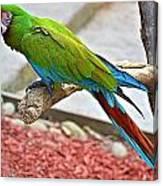 Colorful Parrot Canvas Print