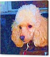 Colorful Poodle Canvas Print