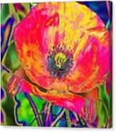 Colorful Poppy Canvas Print