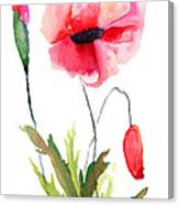 Colorful Poppy Flowers Canvas Print