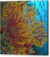Colorful Sea Fan Or Gorgonian Coral Canvas Print