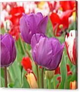 Colorful Spring Tulips Garden Art Prints Canvas Print