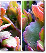Colorful Succulents In Stereo Canvas Print