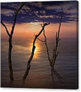 Colorful Sunset Seascape With Tree Trunks Canvas Print
