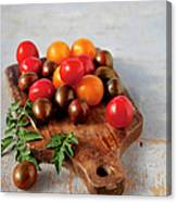 Colorful Tomatoes Canvas Print