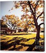 Colorful Trees Of Long Beach In The Autumn Canvas Print