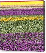 colorful tulips in Holland Canvas Print
