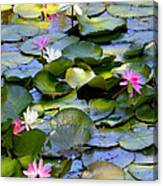 Colorful Water Lily Pond Canvas Print