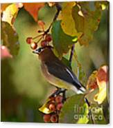 Waxwing In Fall Colors Canvas Print