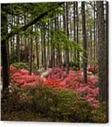 Colorful Woodland Azalea Garden Canvas Print